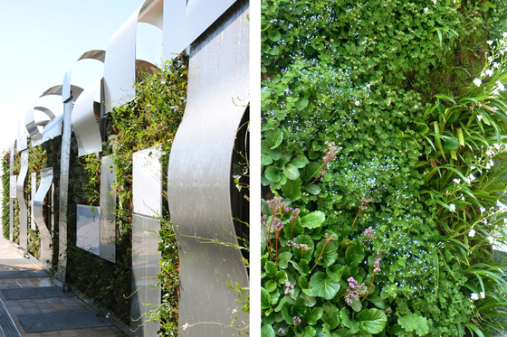 muri vegetali 2